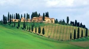 Cipressen karakteristiek voor Toscane