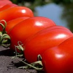 Soorten Italiaanse tomaten
