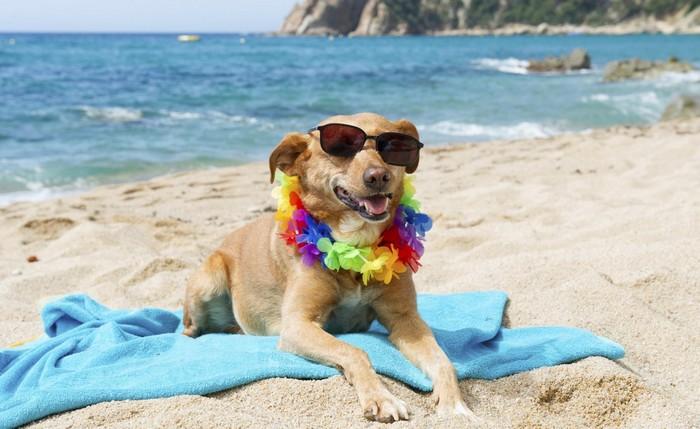 hond mee op vakantie italie regels voorbereiding