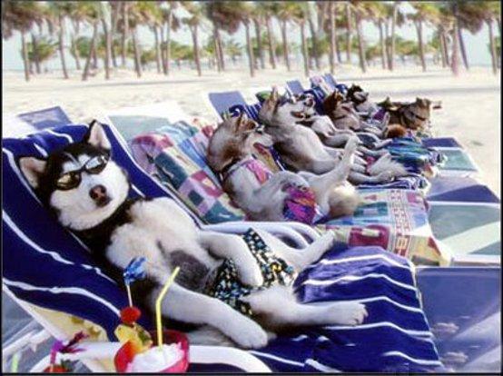 hond vakantie italie