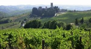 Wijngaarden in Toscane