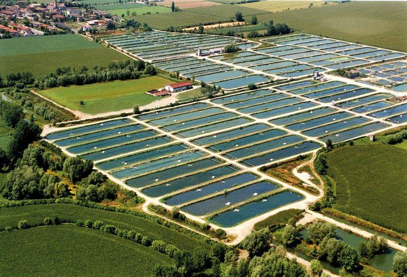 De bassins van de kweeksteuren