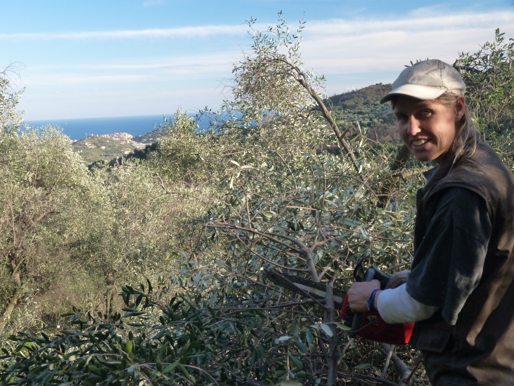 een-olijfgaard-vergt-veel-onderhoud-met-de-hand