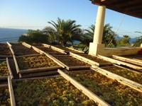 Malvasia druiven drogen in de zon
