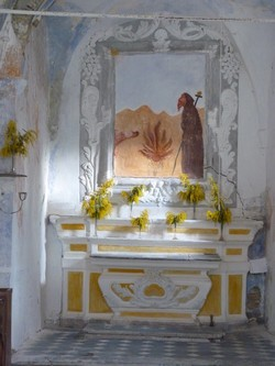 Mimosa op het altaar bij S. Antonio