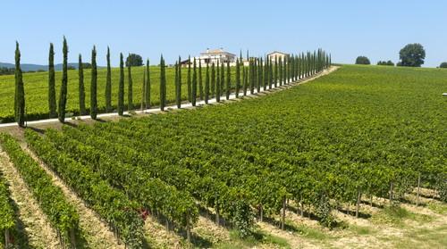 De kenmerkende cipressen in Toscane zijn de entree van een schitterend landgoed