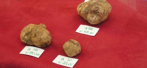 Truffels op de markt in Alba, Piemonte